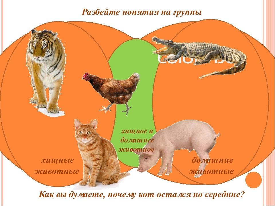 хищные животные Как вы думаете, почему кот остался по середине? домашние жив...