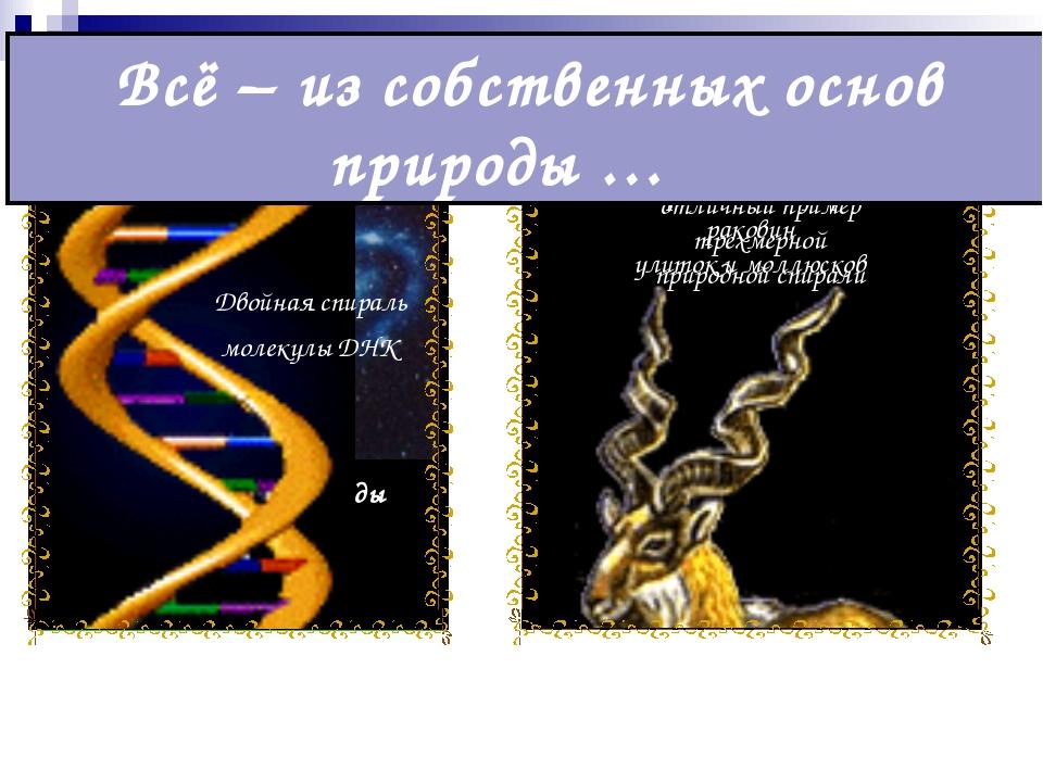 Папоротник Туманность Андромеды пример спиралевидной галактики Спиралевидные...