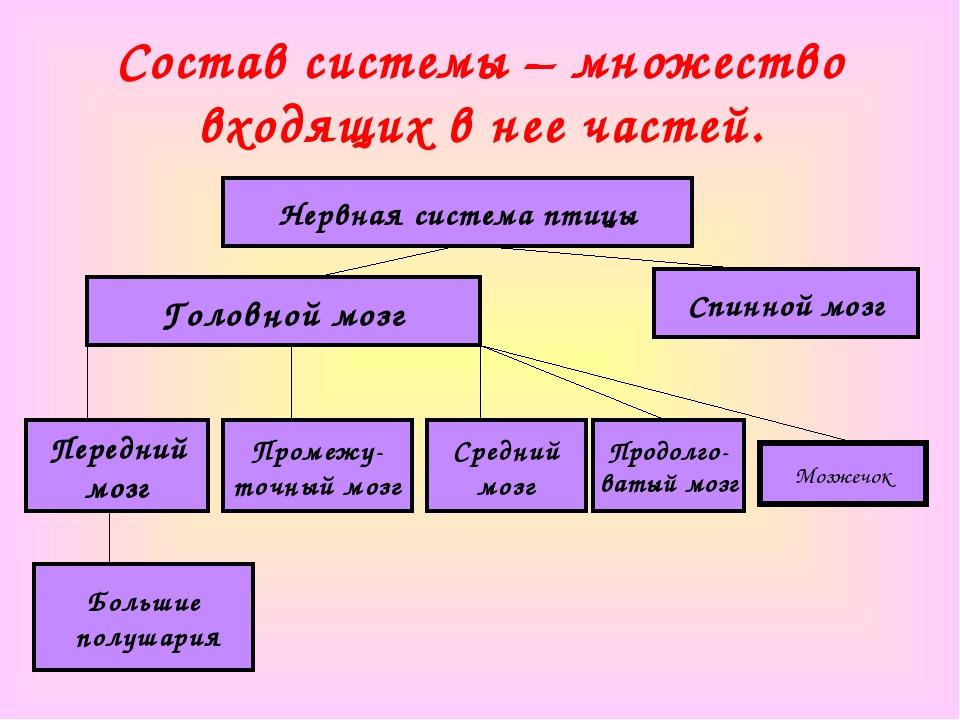 Состав системы – множество входящих в нее частей. Нервная система птицы Голов...