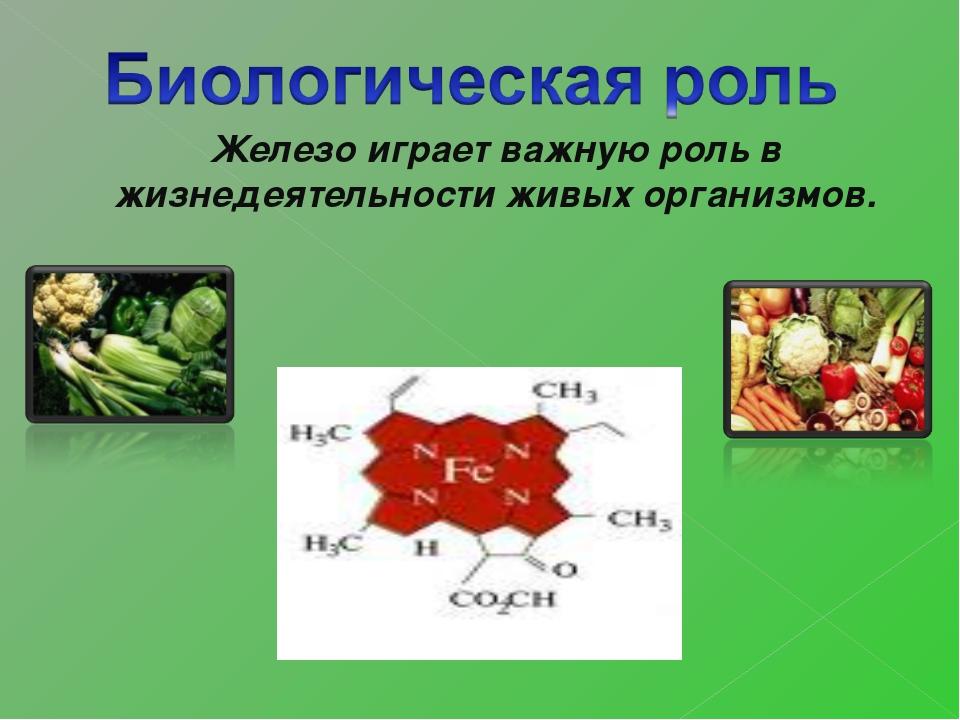 Железо играет важную роль в жизнедеятельности живых организмов.
