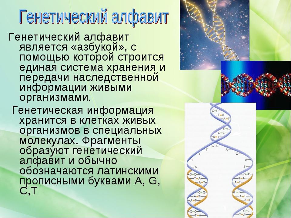 Генетический алфавит является «азбукой», с помощью которой строится единая си...