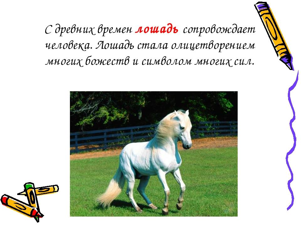С древних времен лошадь сопровождает человека. Лошадь стала олицетворением мн...