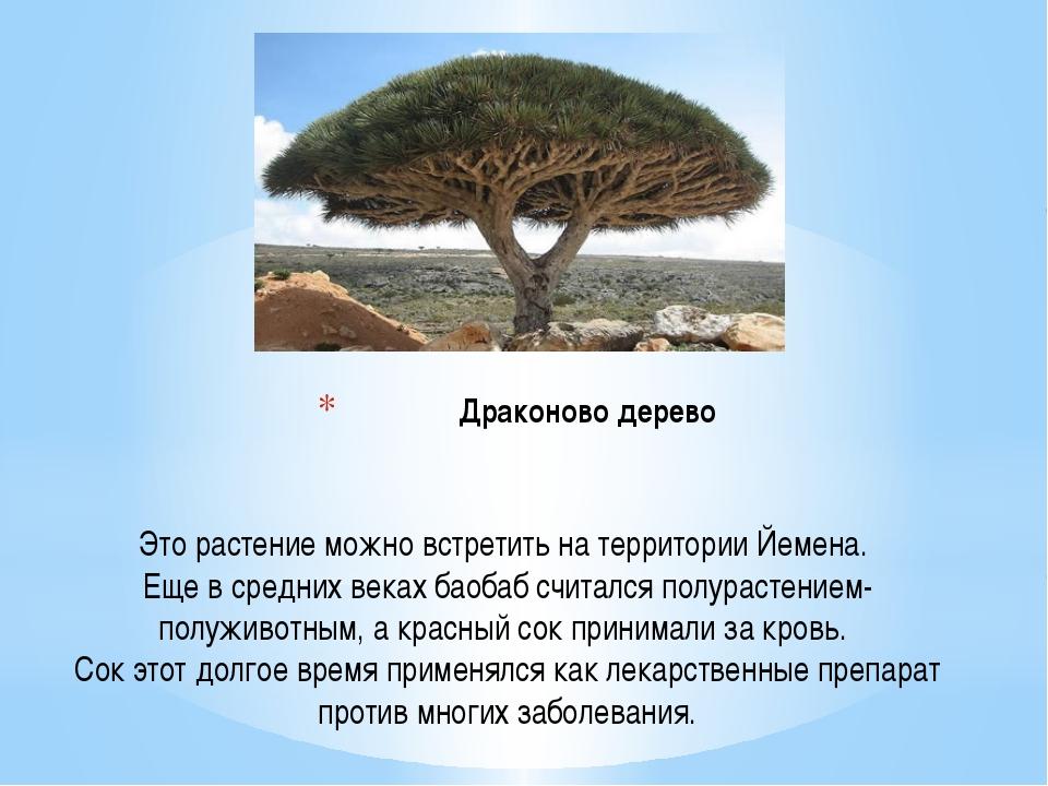 Драконово дерево Это растение можно встретить на территории Йемена. Еще в сре...