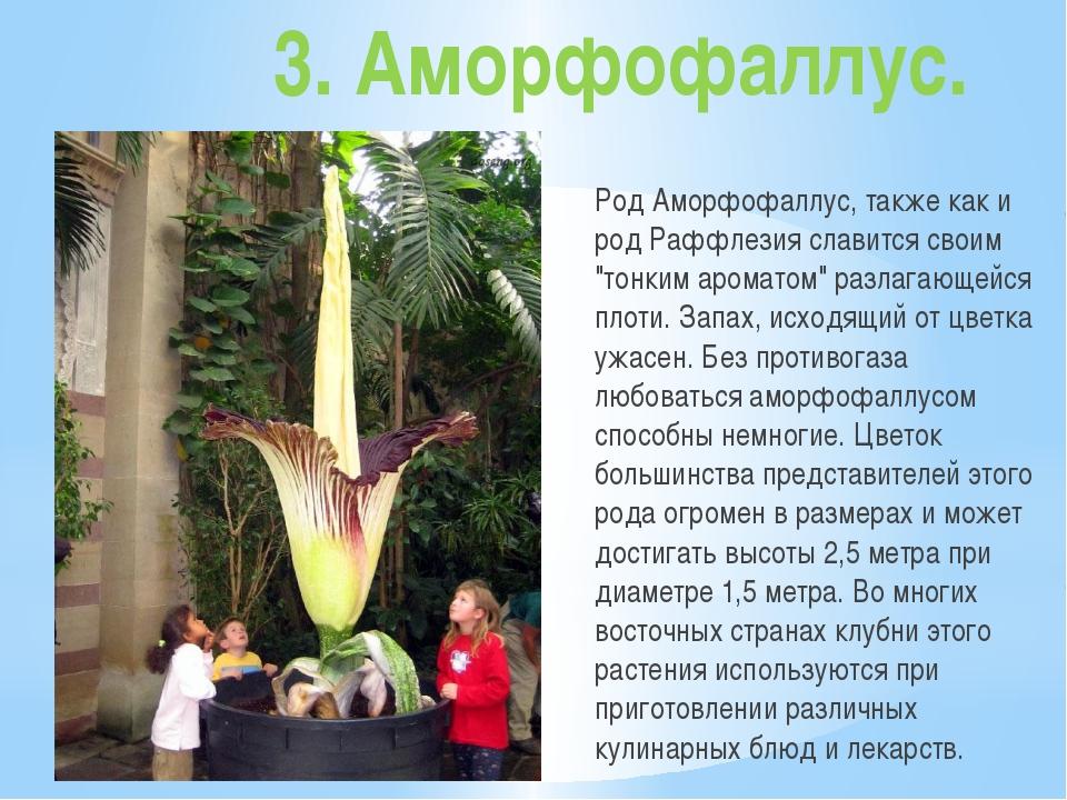 """3. Аморфофаллус. Род Аморфофаллус, также как и род Раффлезия славится своим """"..."""