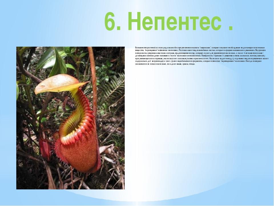 6. Непентес . Большинство растений из этого рода можно без преувеличения назв...