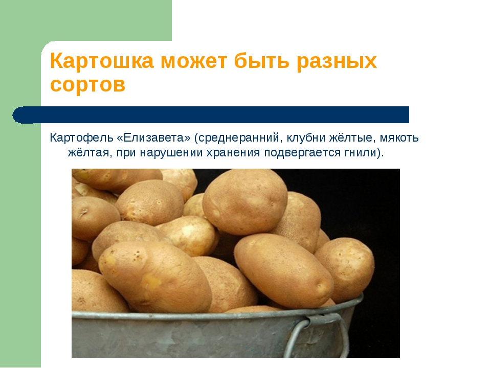 Картошка может быть разных сортов Картофель «Елизавета» (среднеранний, клубни...