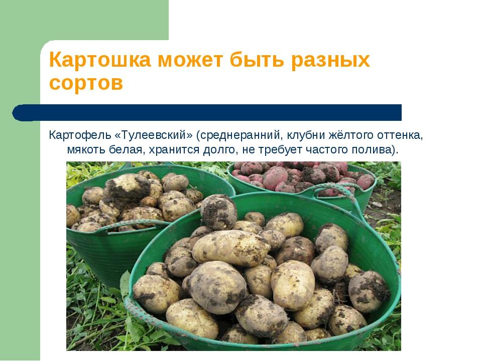 Картошка может быть разных сортов Картофель «Тулеевский» (среднеранний, клубн...