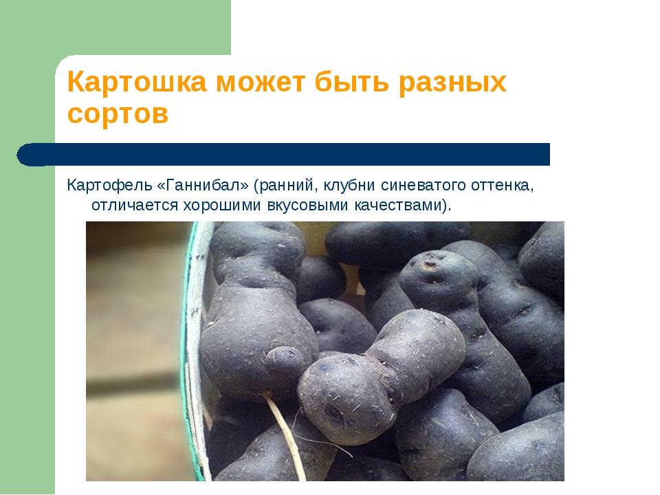 Картошка может быть разных сортов Картофель «Ганнибал» (ранний, клубни синева...