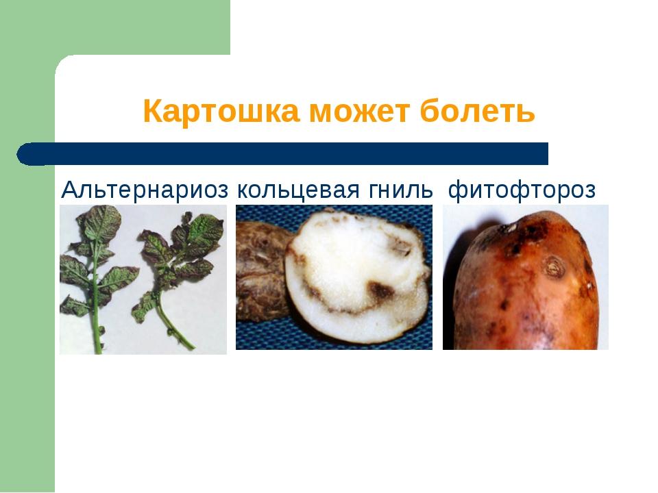 Картошка может болеть Альтернариоз кольцевая гниль фитофтороз