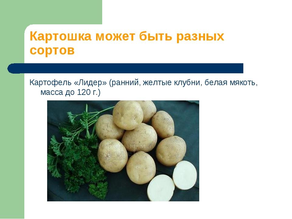 Картошка может быть разных сортов Картофель «Лидер» (ранний, желтые клубни, б...