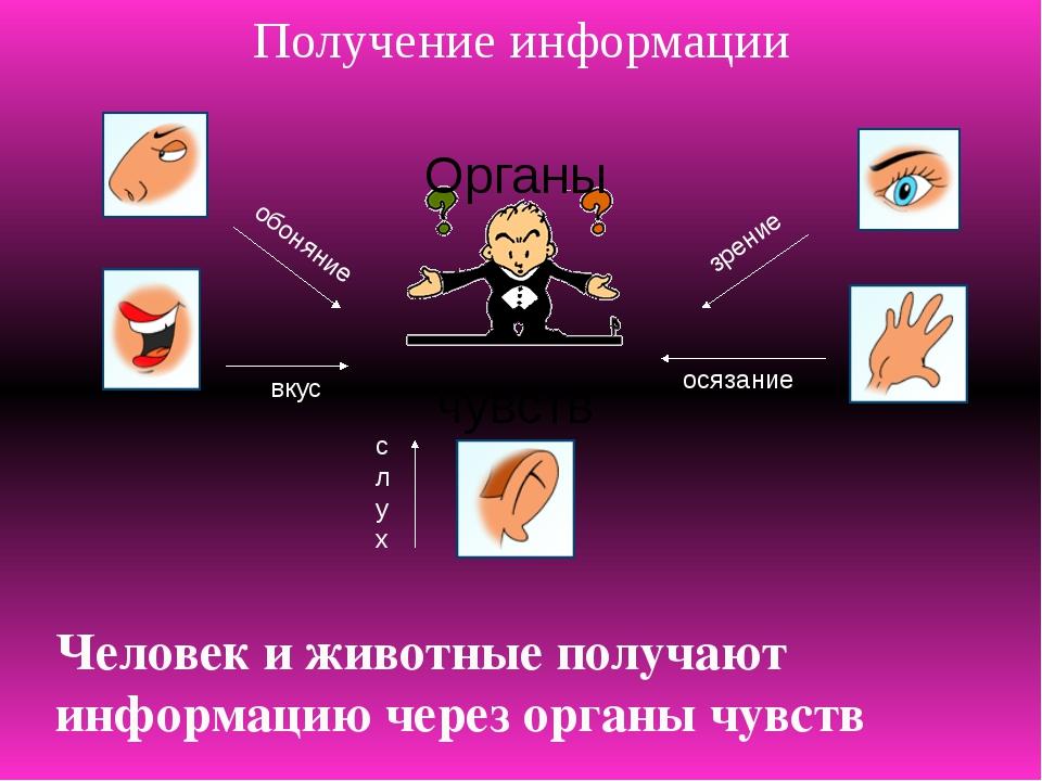 Получение информации Органы чувств обоняние зрение осязание слух вкус Человек...