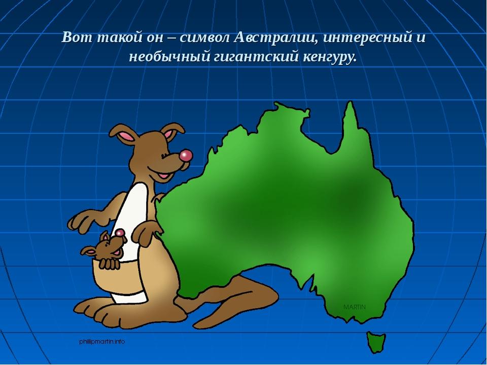 Вот такой он – символ Австралии, интересный и необычный гигантский кенгуру.