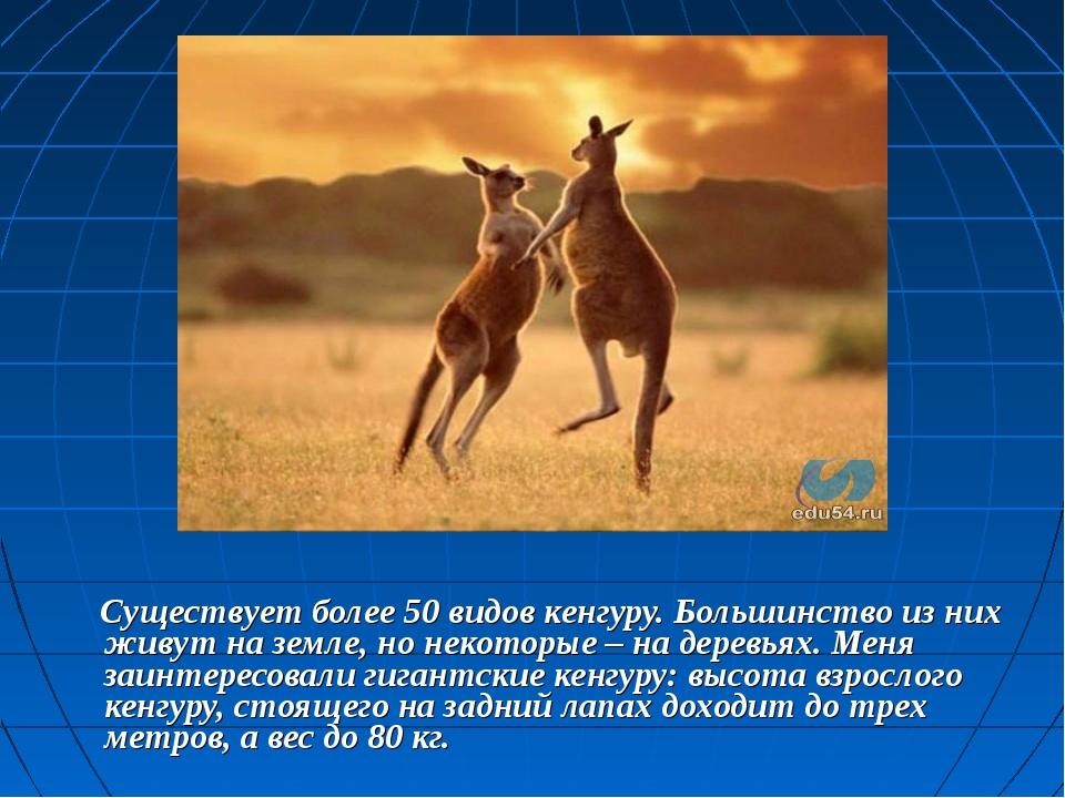 Существует более 50 видов кенгуру. Большинство из них живут на земле, но нек...