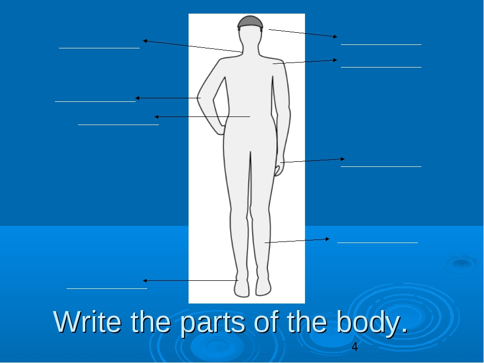 Write the parts of the body.