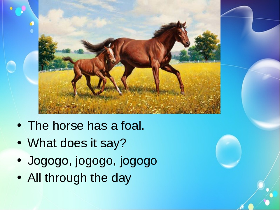 The horse has a foal.