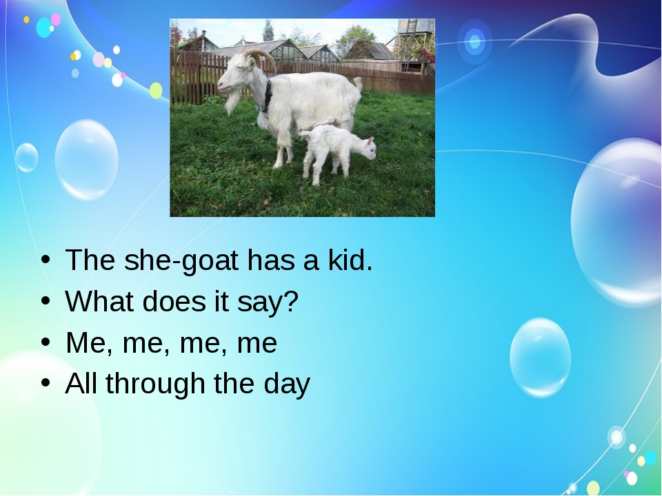 The she-goat has a kid.