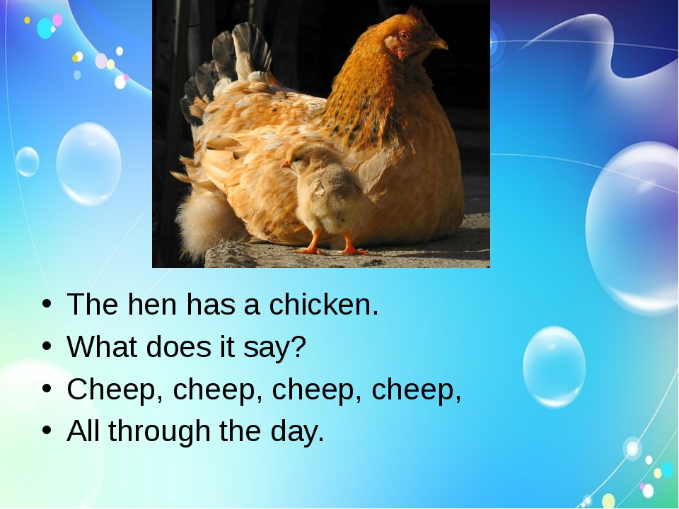 The hen has a chicken.
