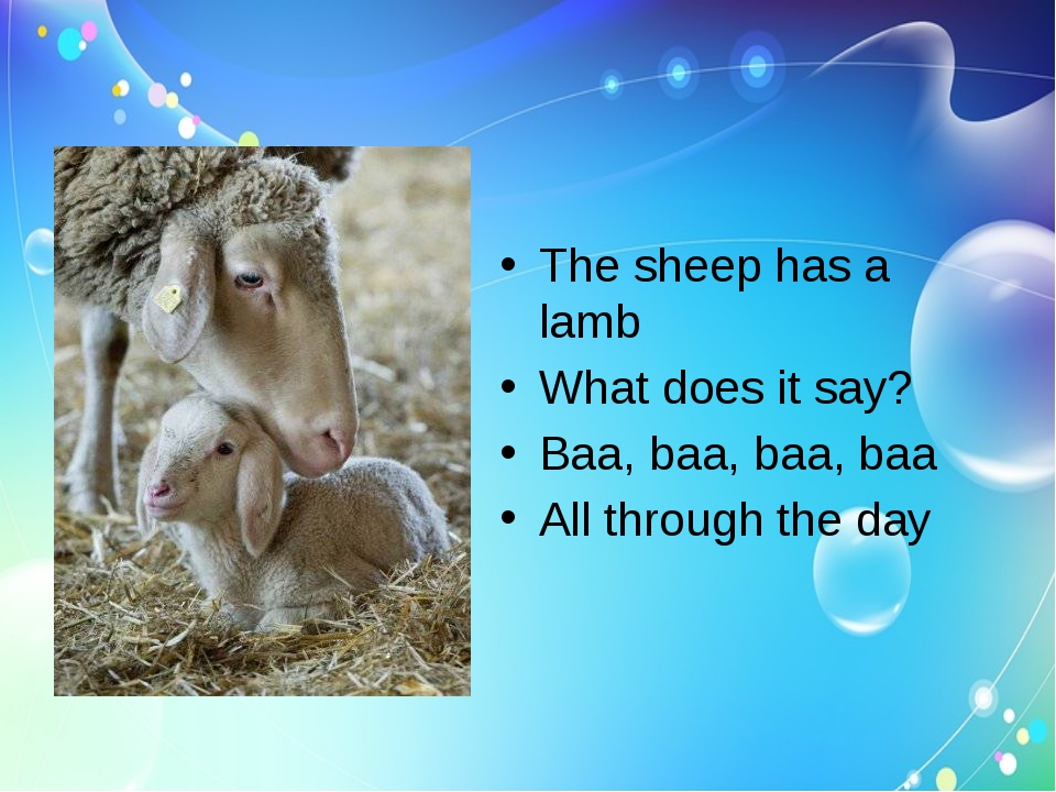 The sheep has a lamb