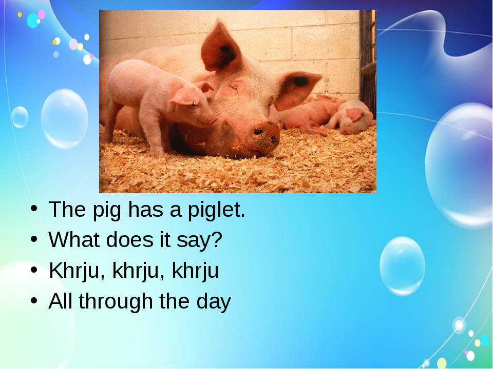 The pig has a piglet.