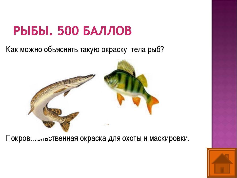 Как можно объяснить такую окраску тела рыб? Покровительственная окраска для о...