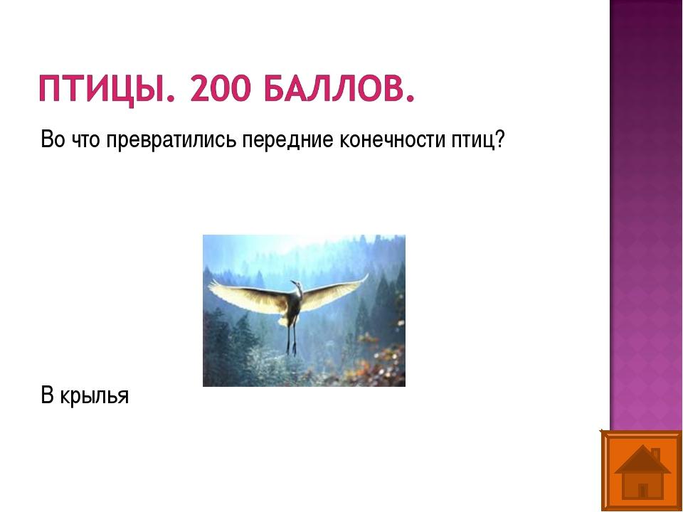 Во что превратились передние конечности птиц? В крылья