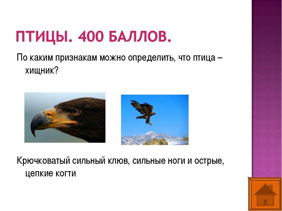 По каким признакам можно определить, что птица – хищник? Крючковатый сильный...