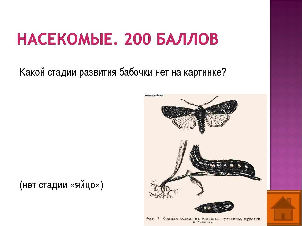 Какой стадии развития бабочки нет на картинке? (нет стадии «яйцо»)