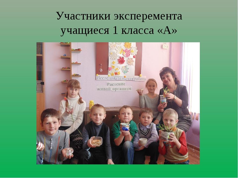 Участники эксперемента учащиеся 1 класса «А»