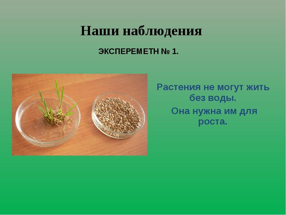 Растения не могут жить без воды. Она нужна им для роста. Наши наблюдения ЭКСП...