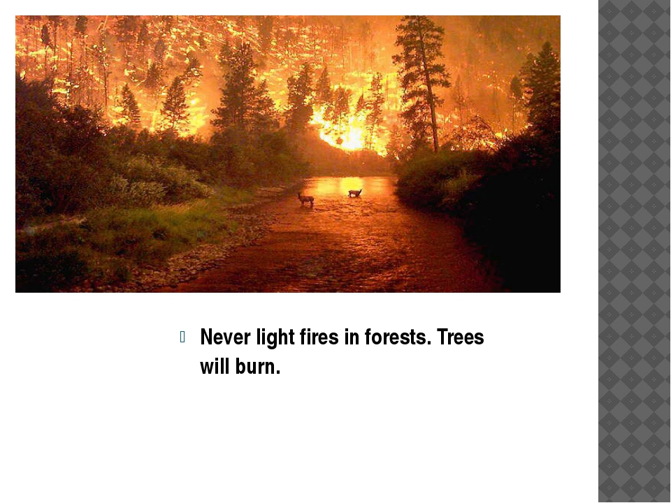 Never light fires in forests. Trees will burn.