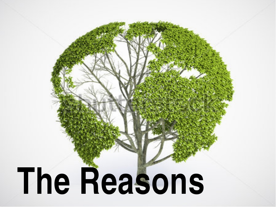 The Reasons The Reasons