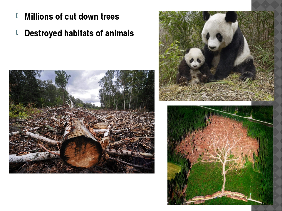 Millions of cut down trees Destroyed habitats of animals