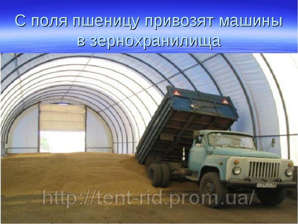 С поля пшеницу привозят машины в зернохранилища