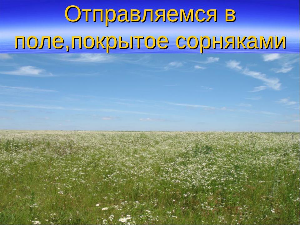 Отправляемся в поле,покрытое сорняками