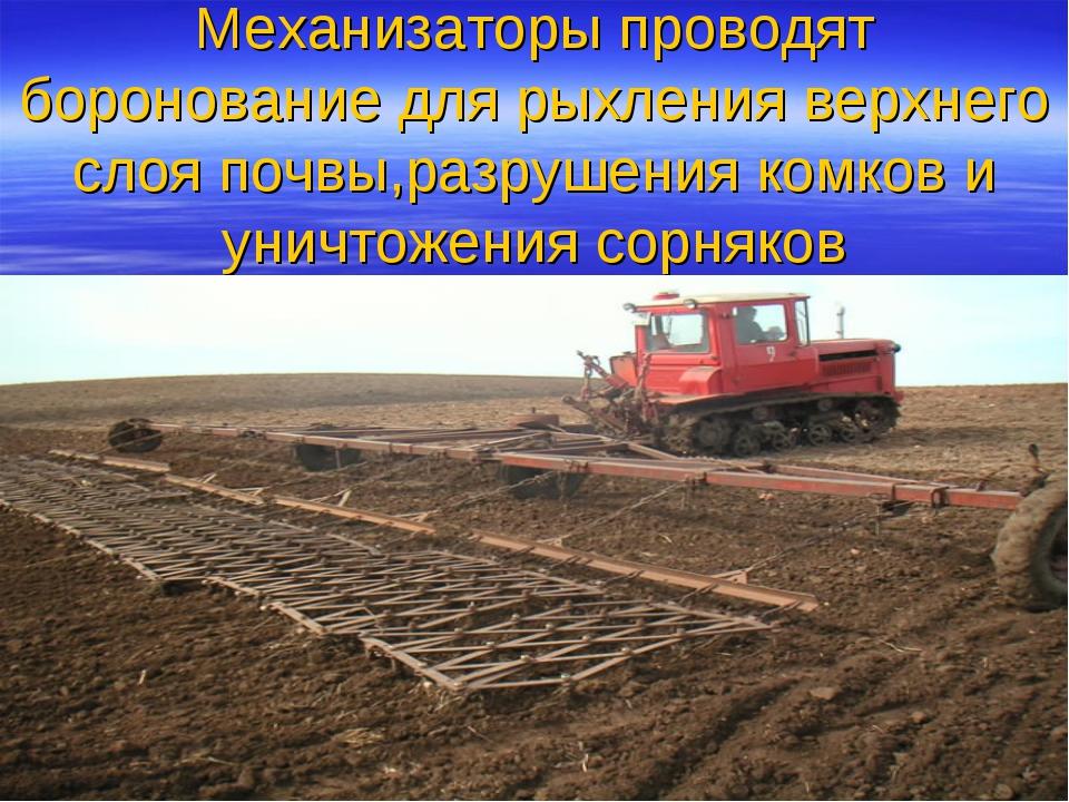 Механизаторы проводят боронование для рыхления верхнего слоя почвы,разрушения...