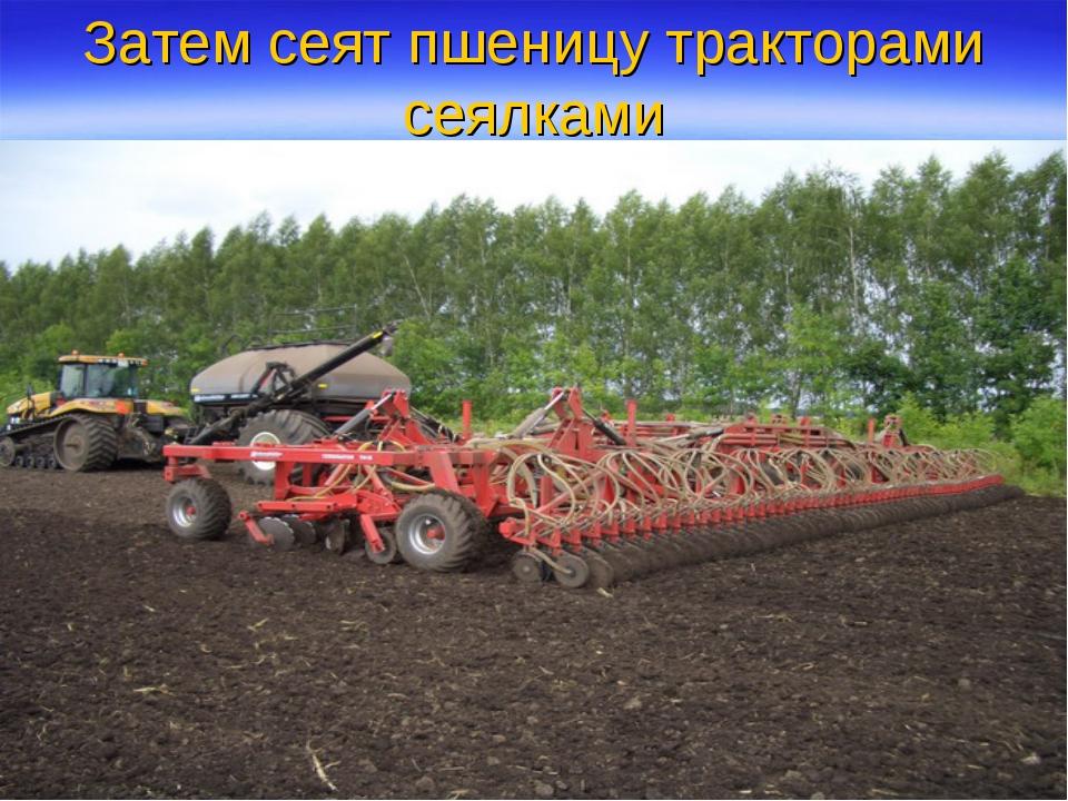 Затем сеят пшеницу тракторами сеялками