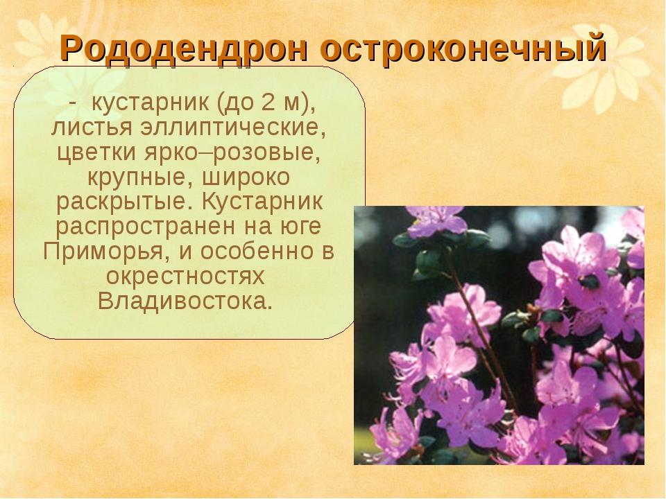 Рододендрон остроконечный - кустарник (до 2 м), листья эллиптические, цветки...