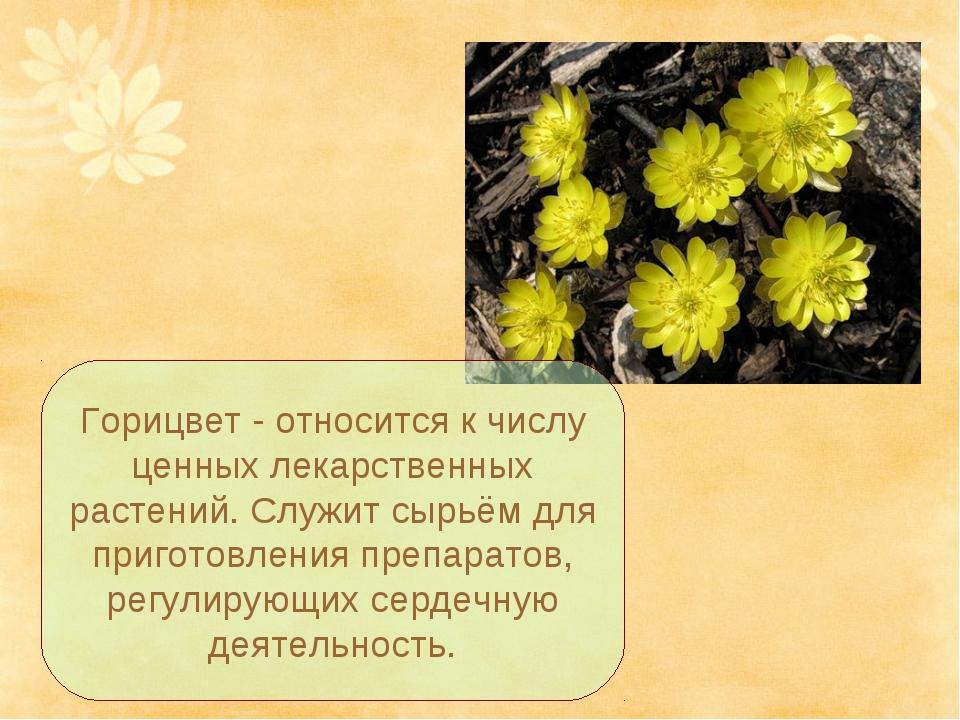 Горицвет - относится к числу ценных лекарственных растений. Служит сырьём для...