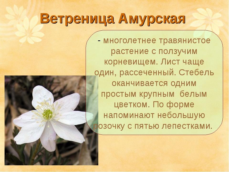 Ветреница Амурская - многолетнее травянистое растение с ползучим корневищем....
