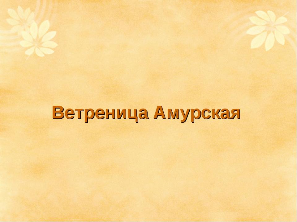 Ветреница Амурская