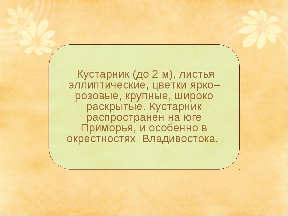 Кустарник (до 2 м), листья эллиптические, цветки ярко–розовые, крупные, широ...