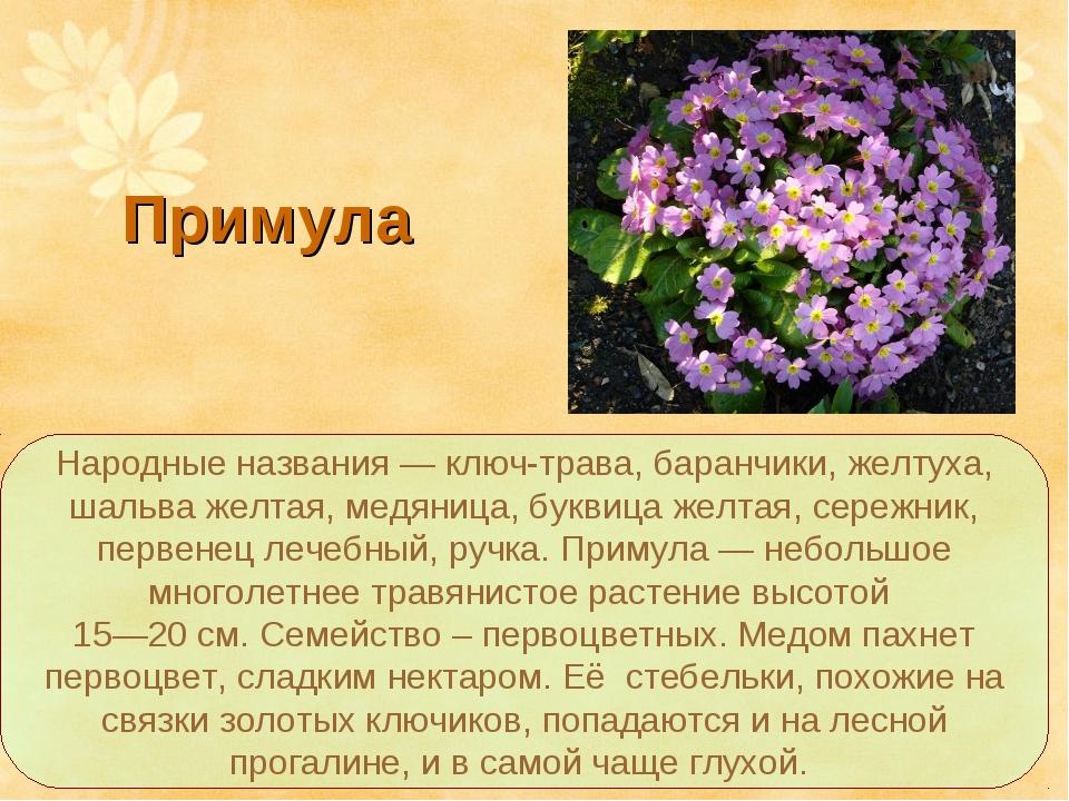 Народные названия — ключ-трава, баранчики, желтуха, шальва желтая, медяница,...