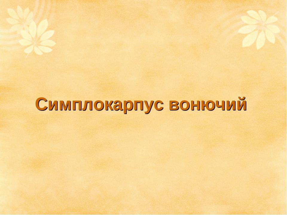 Симплокарпус вонючий