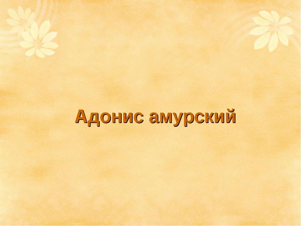 Адонис амурский