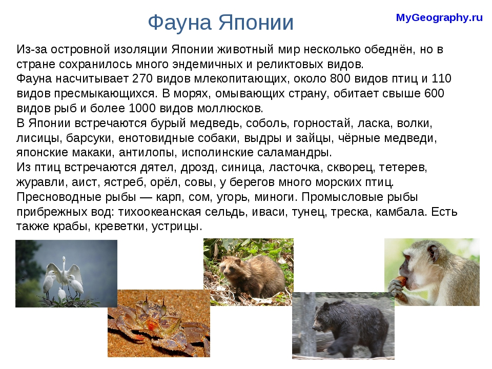 Фауна Японии Из-за островной изоляции Японии животный мир несколько обеднён,...