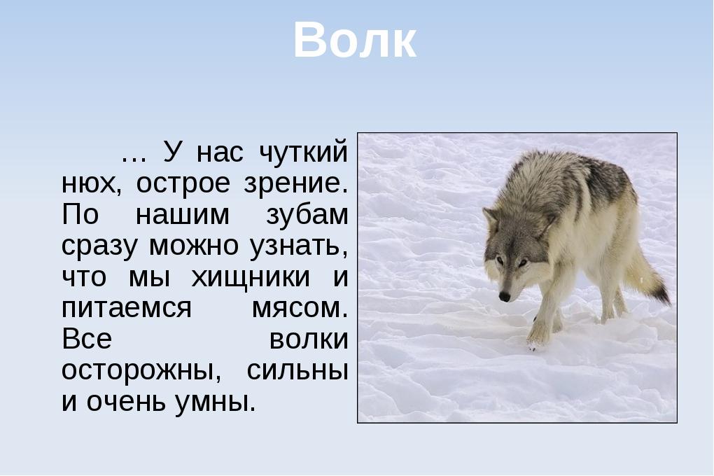 Волк … У нас чуткий нюх, острое зрение. По нашим зубам сразу можно узнать, чт...