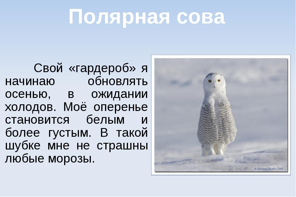 Полярная сова Свой «гардероб» я начинаю обновлять осенью, в ожидании холодов....