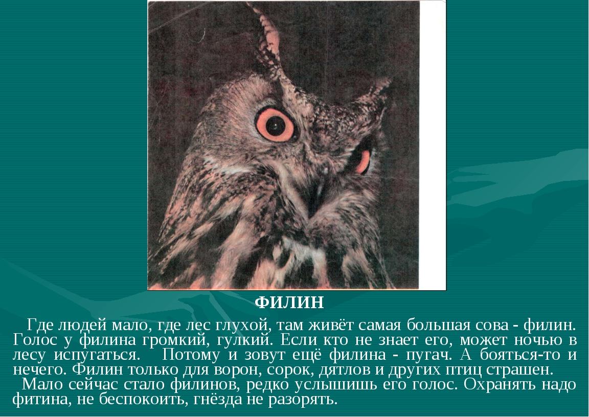 ФИЛИН Где людей мало, где лес глухой, там живёт самая большая сова - филин....