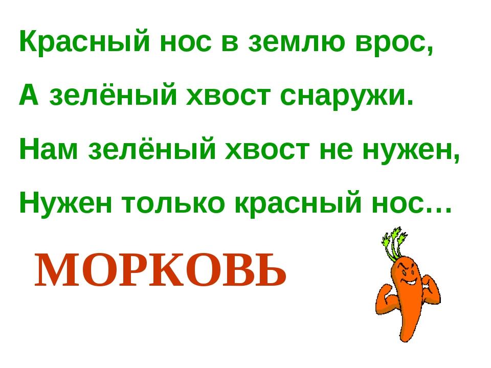Красный нос в землю врос, А зелёный хвост снаружи. Нам зелёный хвост не нужен...