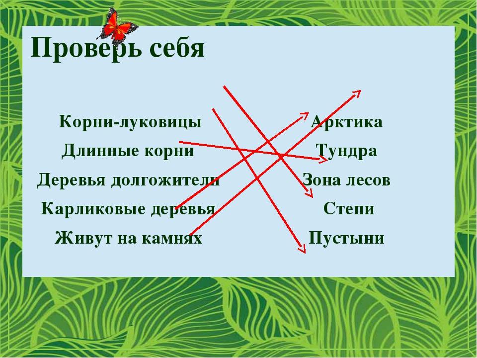 Проверь себя Корни-луковицы Арктика Длинные корни Тундра Деревья долгожители...